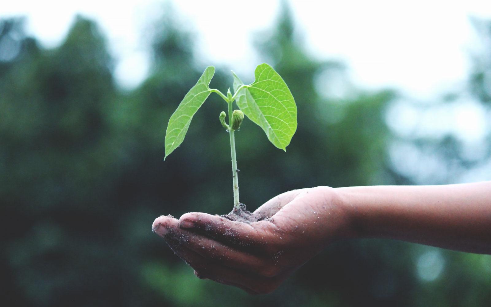 Il valore della resilienza - Silvia Mirandola
